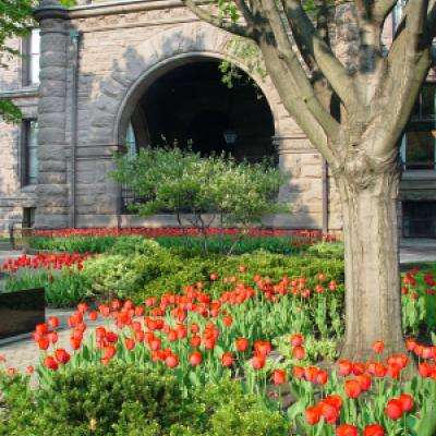 Tulip beds on the east grounds of the Legislative Building.