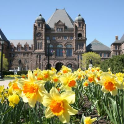 Spring daffodils on the south grounds of the Legislative Building.